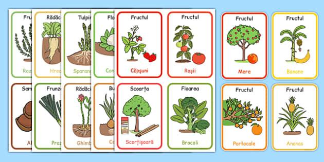 Partea comestibila a plantelor, Cartonase - plante comestibile