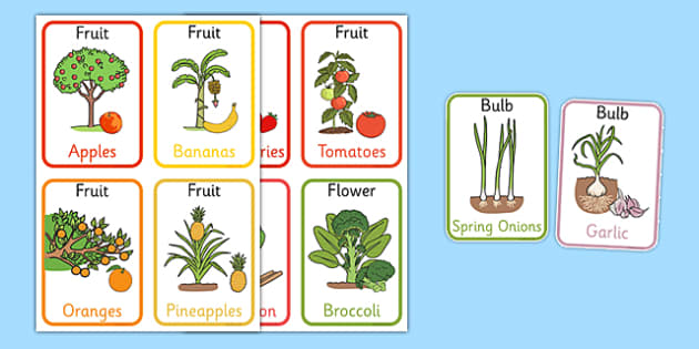 Edible Plant Parts Flash Cards - edible plant, plant parts, flash cards