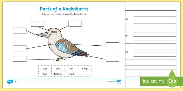 Parts Of A Kookaburra Activity Sheets