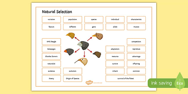 Natural Selection Word Mat