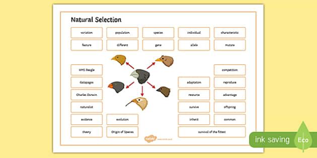 Natural Selection Word Mat