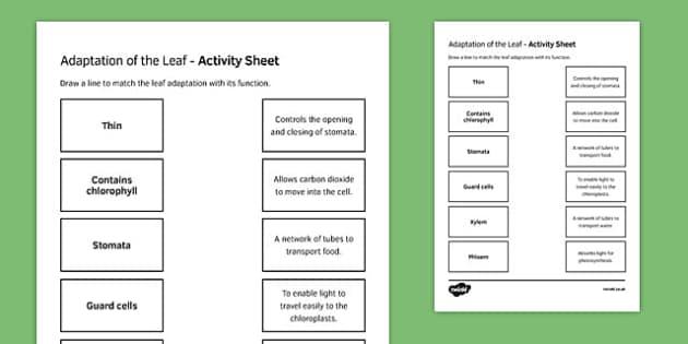 Leaf Adaptations Match and Draw
