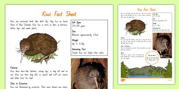 New Zealand Native Birds Kiwi Fact Sheet - nz, new zealand, Native, birds, animals