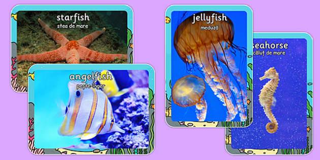 Sea Creature Display Photos Romanian Translation -  ocean, underwater, sea, sea creatures, seaside, animals, fish, shark, seahorse, photos, pictures, images, display, Romania, EAL, bilingual