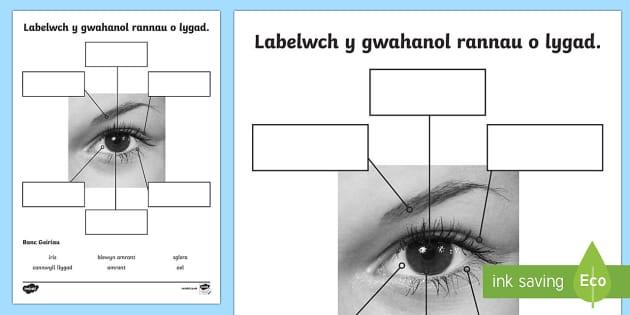 Taflenni Gwaith Gwahaniaethol Y Synhwyrau Golwg Galluog - Dysgu Cymraeg fel Ail Iaith, gwyddoniaeth, synhwyrau, golwg, labeli, gallu uchel,Welsh