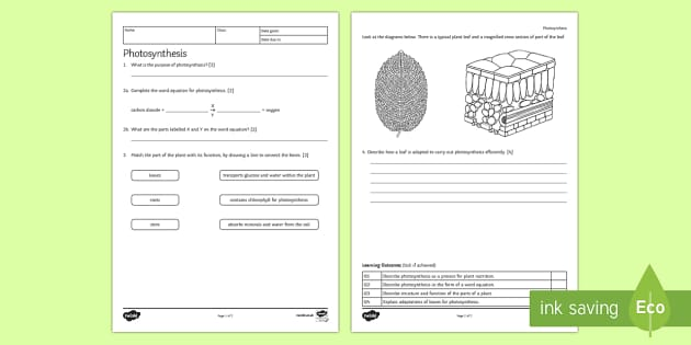 KS3 Photosynthesis Homework Activity Sheet - Homework, photosynthesis, plant nutrition, plant, leaf, adaptations, glucose, food, energy, chloroph