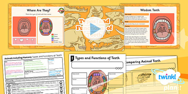 PlanIt - Science Year 4 - Animals Including Humans Lesson 3: Types and Functions of Teeth Lesson Pack
