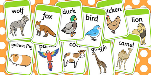 Animal Flashcards - animal, flashcards, cards, compare, game
