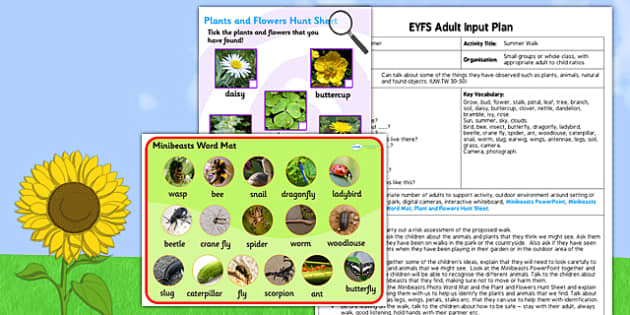 A Summer Walk EYFS Adult Input Plan and Resource Pack - adult focus