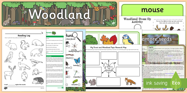 Forest and Woodland Resource Pack - Forest, woodlands, forest and woodlands, woodland animals