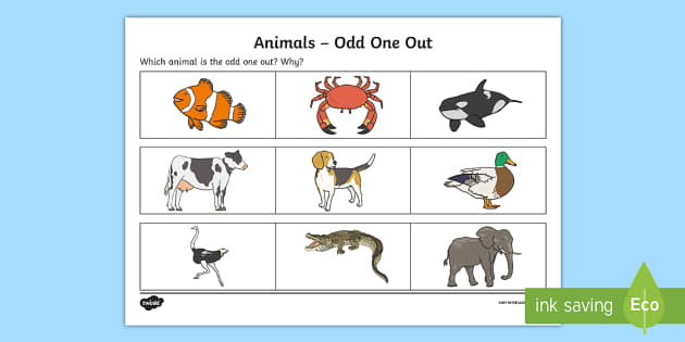 Animals Odd One Out Activity Sheet - Odd One Out, verbal reasoning, worksheet, animals,