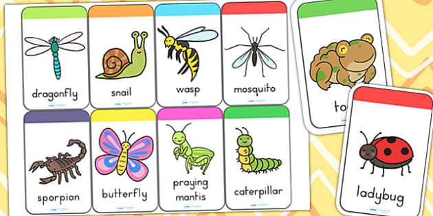 Minibeasts Cute Flashcards - flash card, word cards, visual aids