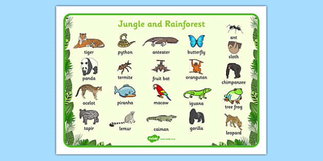 Free Worksheets wh worksheets : Jungle u0026 Rainforest Word Mat - Jungle, Rainforest, word mat