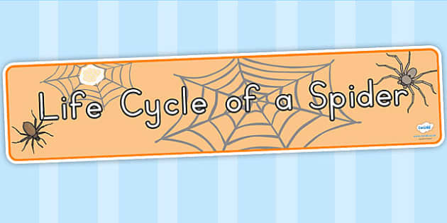 Spider Life Cycle Display Banner - life cycles, lifecycle, header
