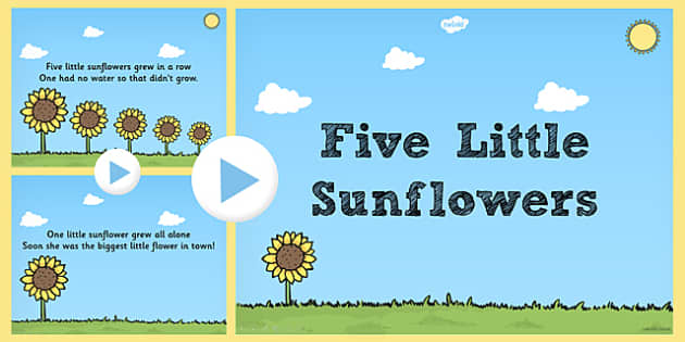 Five Little Sunflowers Counting Song PowerPoint - counting, song