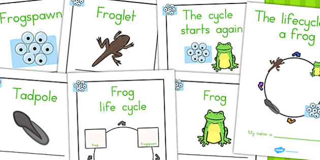Frog Lifecycle Workbook - life cycles, lifecycles, worksheets