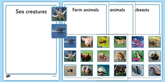 Photo Sea Creatures, Farm Animals, Wild Animals and Minibeasts Sorting Activity - sorting, activity