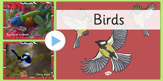Australian Birds PowerPoint - australia, birds, powerpoint, animals
