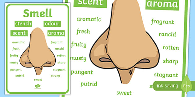 Smell Vocabulary Display Poster