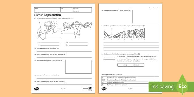 KS3 Human Reproduction Homework Activity Sheet - Homework, reproduction, human reproduction, reproducing, gamete, gametes, egg, cell, sperm, speciali