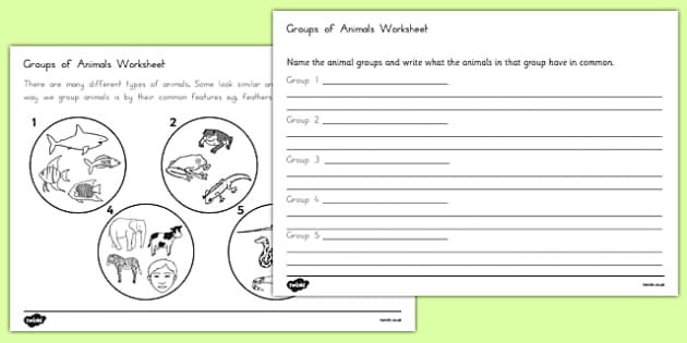 Animal Groups Worksheet - australia, animal, groups, worksheet