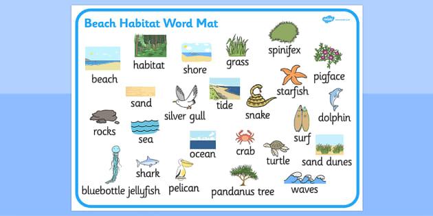 Beach Habitat Word Mat - australia, Science, Year 1, Habitats, Australian Curriculum, Beach, Living, Living Adventure, Environment, Living Things, Animals, Plants, Word Mat