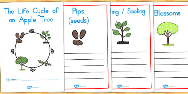 Apple Tree Life Cycle Workbook - life cycles, visual aids, trees