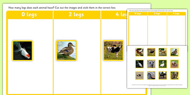 Photo Animal Leg Sorting Activity - photo, animal, leg, sorting, activity, sort