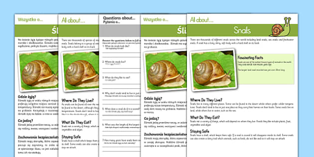 Snail Reading Comprehension English/Polish
