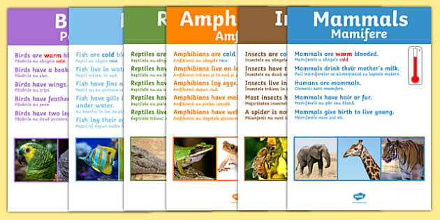 Animal Groups Display Poster Photos Romanian Translation - romanian, animal groups, display