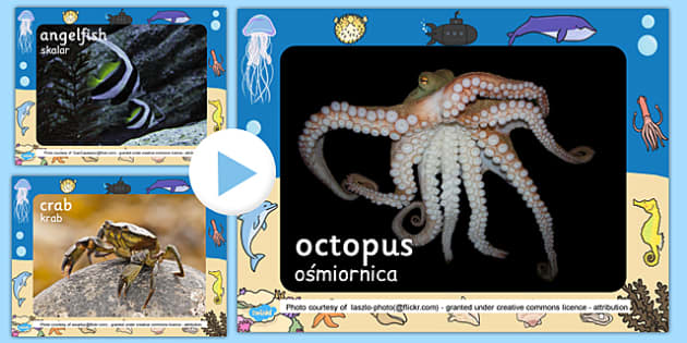 Under The Sea Photo PowerPoint Polish Translation - sea, seaside, oceans, animals, creatures, Polish, Poland, EAl, bilingual, translated