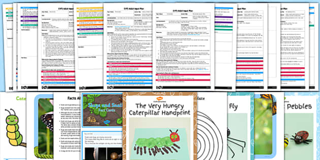 EYFS Minibeasts Adult Input Planning and Resource Pack - minibeast, plan