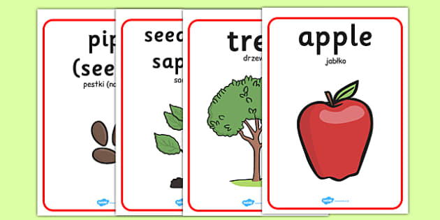 Apple Tree Life Cycle Growth Posters Polish Translation - polish, apple tree posters, apple tree life cycle posters, apple tree growth posters, posters, display posters