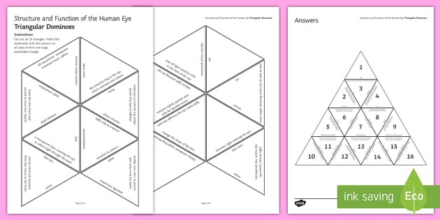 Structure and Function of the Human Eye Tarsia Triangular Dominoes - Tarsia, the human eye, structure of the eye, the eye, eye, function of the eye, parts of the eye, se
