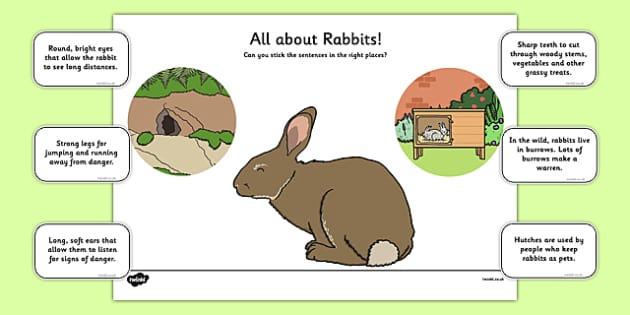 Label a Rabbit - label a rabbit, label, rabbit, activity, game, bunny rabbit, bunny