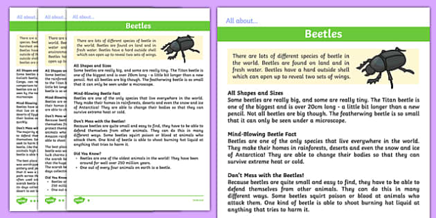Beetles Differentiated Fact File - beetles, differentiated, fact file, facts, information