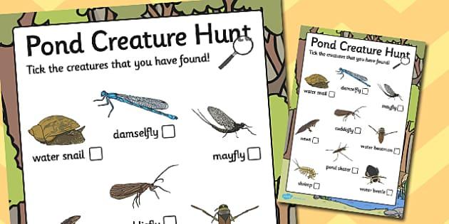 Pond Creature Hunt Sheet - pond, creature, hunt sheet, hunt