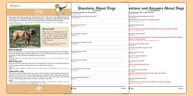 Dogs Reading Comprehension Mandarin Chinese Translation - mandarin chinese, Reading comprehension, dog, find, locate, read, comprehend, fact, title, fact file, information, question