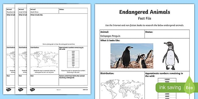 Endangered Animal Fact File Research Activity Sheet, worksheet