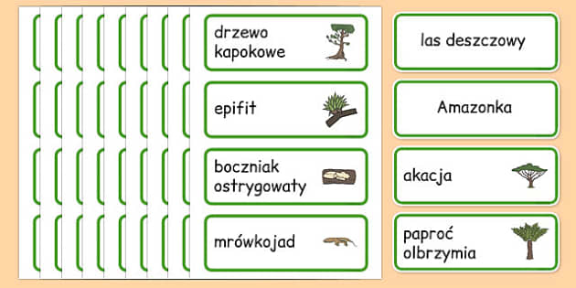 Karty ze słownictwem Las deszczowy po polsku - równik, geografia - rainforest, amazong, plants, trees, vocabulary, polish, poland, eal, rain, forest, habitat, environment