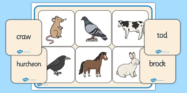 Scots Animal Words Match up Game - CfE, Literacy, Scots Language, cfe, animal, match up, game, words