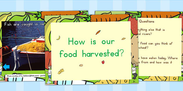 How Is Our Food Harvested PowerPoint - harvest, food, autumn