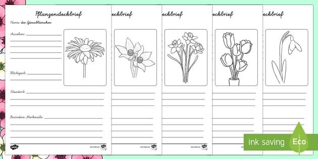 Frühlingsblumen Steckbriefe Schreibvorlagen - Frühling, Steckbrief, Frühblüher, Blumen, Pflanzen,German.