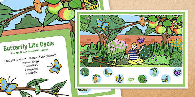 Butterfly Life Cycle Can You Find Poster and Prompt Card Pack - butterfly, life, cycle, egg, caterpillar, cocoon, chrysalis
