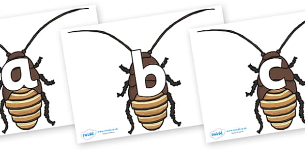 Phoneme Set on Cockroach - Phoneme set, phonemes, phoneme, Letters and Sounds, DfES, display, Phase 1, Phase 2, Phase 3, Phase 5, Foundation, Literacy
