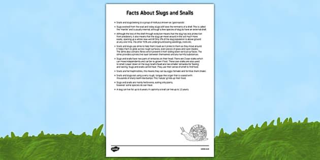 Slugs and Snails Adult Information Sheet - EYFS, Understanding the world, minibeasts