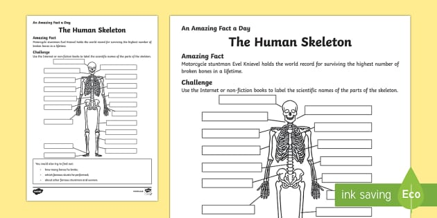 The Human Skeleton Activity Sheet