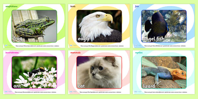 Animal Classes Display Photos - animal, classes, animals, photos