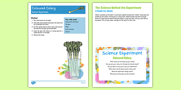 EYFS Coloured Celery Science Experiment and Prompt Card Pack