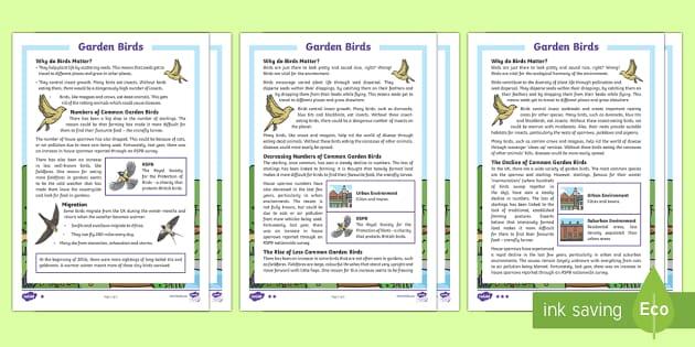 KS2 Garden Birds Differentiated Fact File - KS1 & 2 RSPB Big School's Birdwatch (3 Jan-17 Feb 2017), RSPB, school, bird, bird watch, fact file,